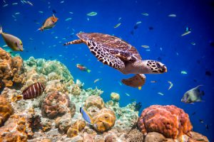 Turtle underwater in ecosystem